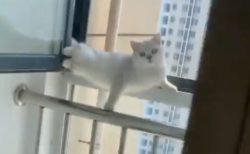 【動画】ドアを開けると変なポーズで固まっていた猫が話題「どういう状況?!」「表情!笑」