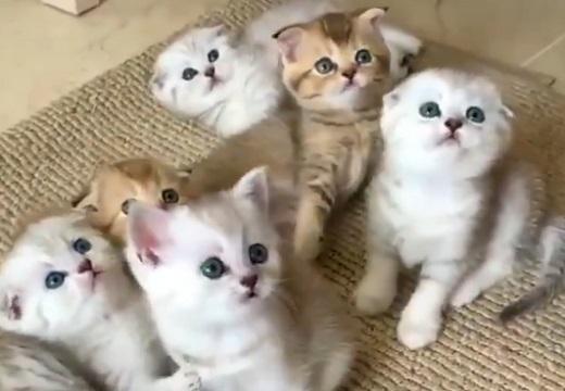 【動画】何かに夢中な子猫軍団、見つめてる真剣な目がキュートすぎる
