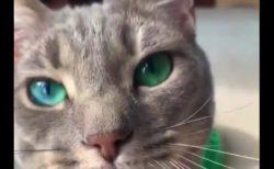 まるで宝石のような「瞳」を持つ猫ちゃんが美しすぎる!