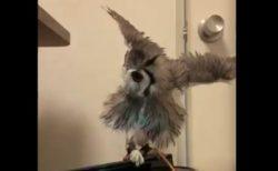 空気清浄機の「風」で遊ぶフクロウが可愛い!
