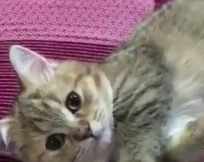 謎の動きをする猫ちゃん。何故こんなに癒されるのか!