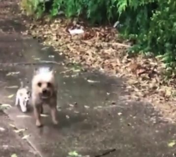 【優しさ】雨の中、小さな野良猫ちゃんを助けるワンコが最高!