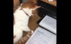 プリンターの動作にビクビク。猫ちゃんの反応が面白い!