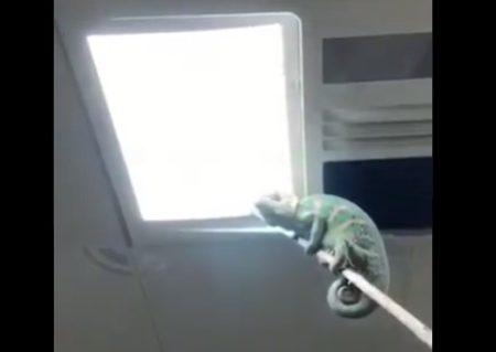 【相棒】虫の駆除に「カメレオン」を派遣。見事に仕事をやってのける!