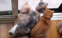 【密です!】何かに興味津々な猫3匹の動画が話題。後頭部の異様な可愛さは一体?!