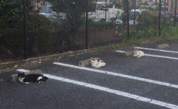 【3密】ソーシャルディスタンスを守る猫ちゃんたちが話題に!