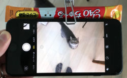 【カメラ】猫か絶対に「目線」をくれるシステムを開発しました!