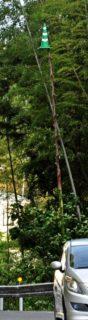 竹の成長スピードの「凄さ」を感じさせられる写真がコチラ。