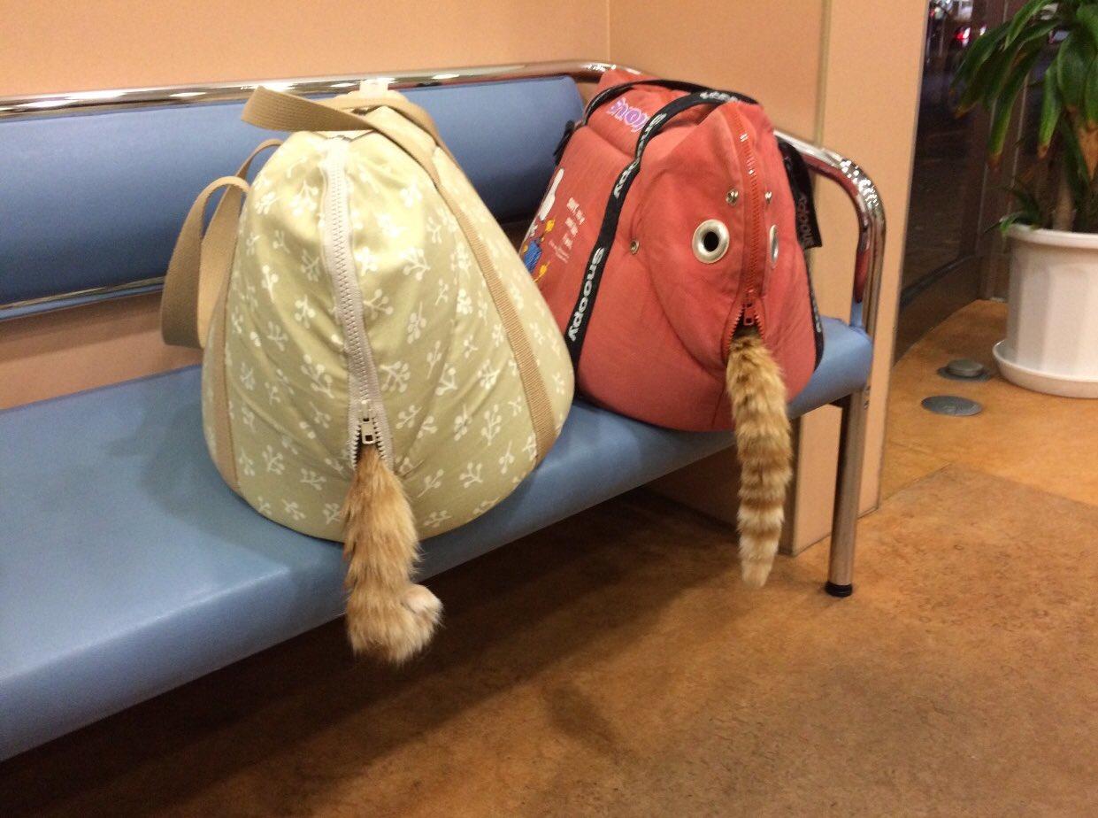 動物病院の待合室での「光景」おもわず笑ってしまった!