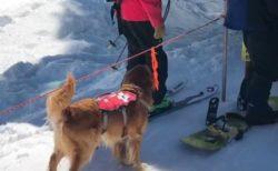 【すごい】隊員の後ろに並び、自分でタイミングを取りリフトに乗るレスキュー犬。めちゃ可愛い!