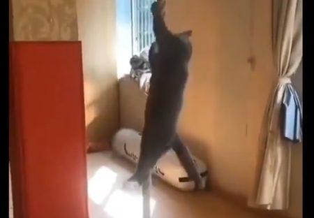 【動画】猫のとんでもない運動能力が話題に