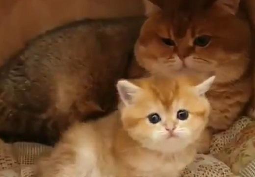 【動画】可愛すぎる猫の親子!そっくりで癒された