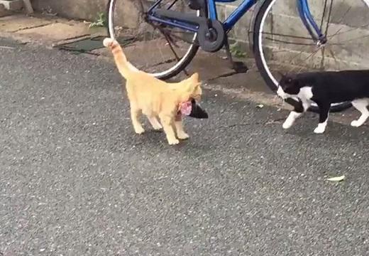 【動画】『お魚くわえたどら猫』が話題「横の狙ってる猫がしつこい(笑)」