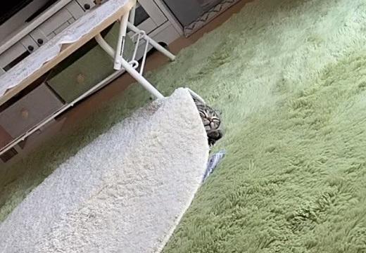 【動画】とんでもない場所で爆睡中の猫ちゃん。寝顔が最高に可愛い・・