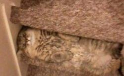 【笑】階段と同化してる猫ちゃん!何してるの?!