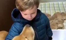 【動画】男の子と犬のママ、信頼しあってる様子がすごく素敵