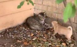 【笑】大好きな猫を見つけた子犬。喜びっぷりがすごい!