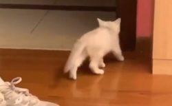 【笑】隠れて飼い主を待ち伏せする猫が話題。こんな待ち伏せされてみたい?!