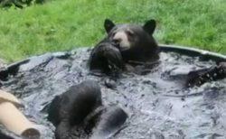 【笑】水風呂に大はしゃぎしてるクマ!想像以上に豪快で楽しそう
