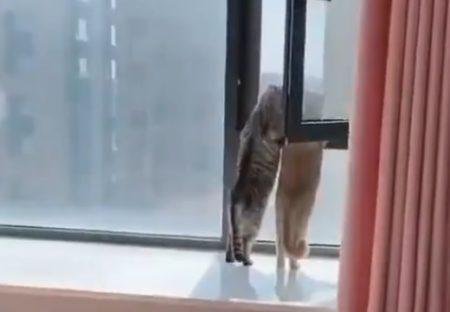【動画】話をしながら仲良く外を眺めている猫2匹がかわいい