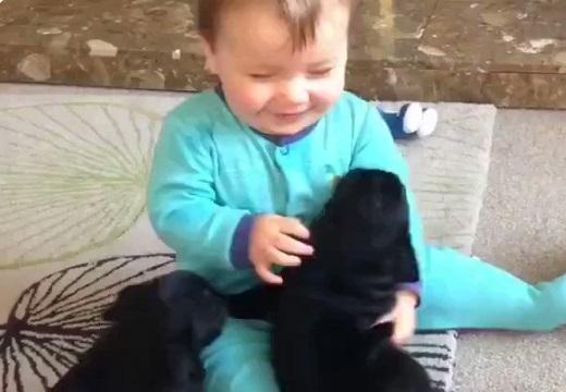 【動画】犬達と遊ぶ赤ちゃんがものすごく楽しそう!見てるだけでほっこりする