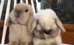 【もこもこ】ウサギがひたすら可愛い動画!見てるだけで和んでしまう