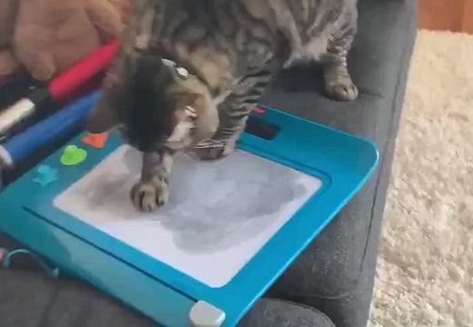 【笑】「せんせい」で遊ぶ猫ちゃん。消えて真っ白になり驚く仕草がかわいい!