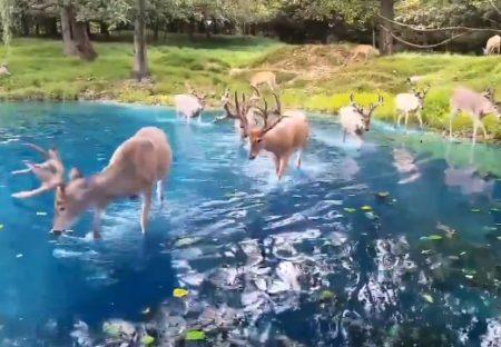 【動画】絵画のような湖の景色が話題「ジブリの世界観」「幻想的・・」
