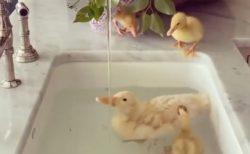 【動画】大理石の洗面台で水遊びする鳥の親子。絵画みたいに美しい