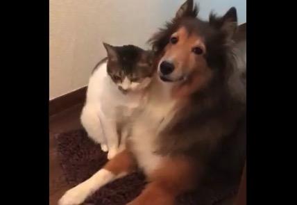 猫が犬に戯れてる動画が最高すぎる。ラブラブだね!
