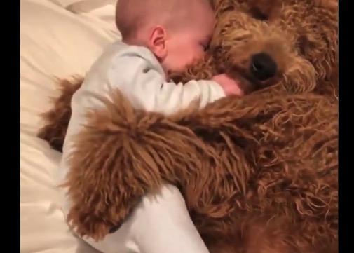 【ワンコ】世界最高峰の「抱きまくら」がコレだ。赤ちゃんも幸せそう!