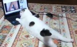 パソコンを悠々と使いこなす猫ちゃん。尻尾が可愛い!