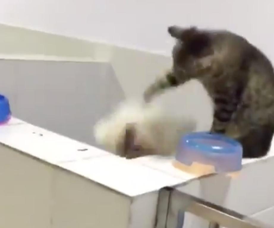 【バスケ】ワンコのジャンプに合わせて「ドリブル」をする猫ちゃん・・・