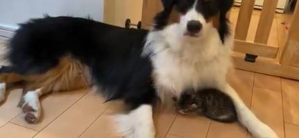 寝てる猫ちゃんに気を使う犬くん。暖かいのかな?