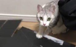お気に入りの箱を壊された猫ちゃん。ガチで怒ってるよ・・・