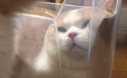 プラケースにピッタリと入る猫ちゃん。快適そうには見えないが・・・