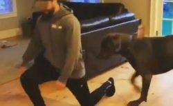 【動画】ストレッチを始めたら真似をしだす犬が話題「可愛いすぎ!!」
