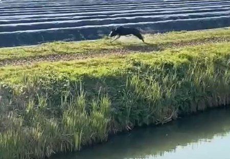 【爆笑】猛スピードで走る犬さん。とんでもない行動にネット騒然「さいごで全部持ってかれた笑」