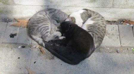 猫3匹が集合。奇跡の「ハートマーク」が完成!