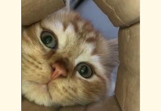 【笑】カメラを発見した猫の行動が話題