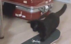 【すごい】スケボーで楽しそうに遊ぶ猫が話題。自分で滑らせ飛び乗る姿が可愛い!