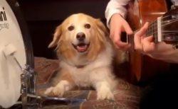【動画】リズム感が優秀すぎる犬が話題「時々ギターを確認してる!」「天才ワンコ!」