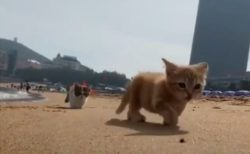 【テケテケ】浜辺を歩く小さな子猫達が話題「ずっと見ていられる!」