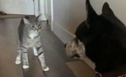 【動画】犬にちょっかいかけたい猫が話題「猫ちゃんの立ち姿が(笑」