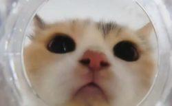 【猫】水のお皿の下にカメラを置いてみたら・・めちゃくちゃ可愛かった!