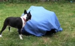 【笑】犬が後ろ向いてるすきに隠れてみたら・・?犬の反応が可愛いすぎた!