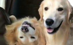 【笑】二日酔いみたいな犬が話題「すっごい顔(笑)」「反対だよ!」