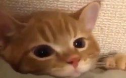 【笑】足が届かない事を察した瞬間の猫の表情が話題