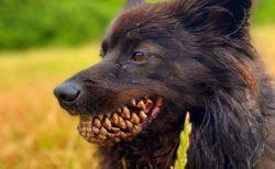 【笑】口に松ぼっくりをくわえた犬が話題。強そう!