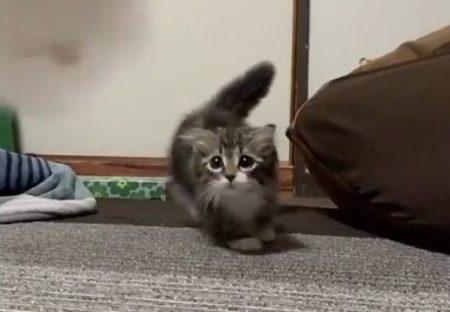 【ふわふわ】子猫の「踏み切ってジャーンプ!」ぜんぶ可愛い!!